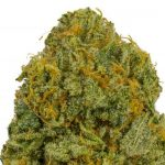 ▷ Online Weeds Store Vancouver Bc | CA