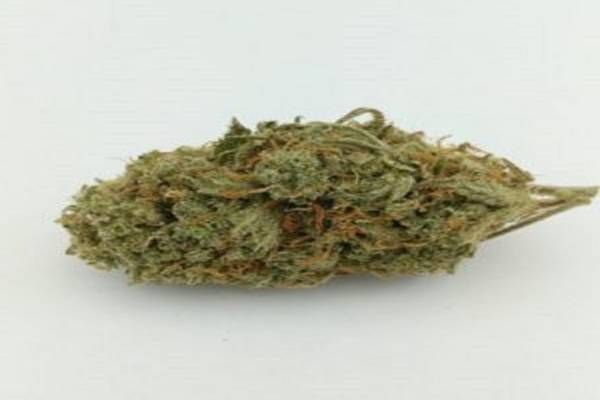 Where To Buy Permafrost Weed In Toronto