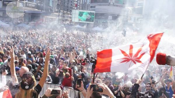 Is Weed Legal In Toronto 2014